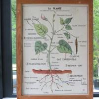 Affiche scolaire La plante & La germination.