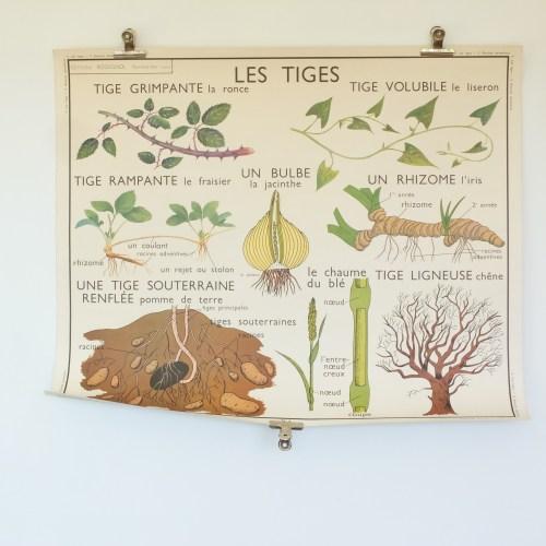 Affiche scolaire Rossignol 3&4 : Racines adventives & Les tiges.