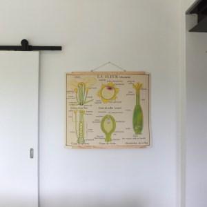 Affiche scolaire Rossignol : La fleur & La plante.