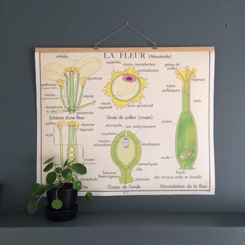 Affiche scolaire rossignol la fleur la plante