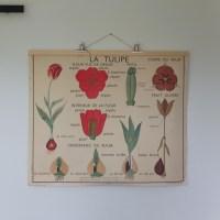 Affiche Rossignol, le bouton d'or & la tulipe, années 1950-1960