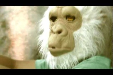Travis The Chimp – The Fourth