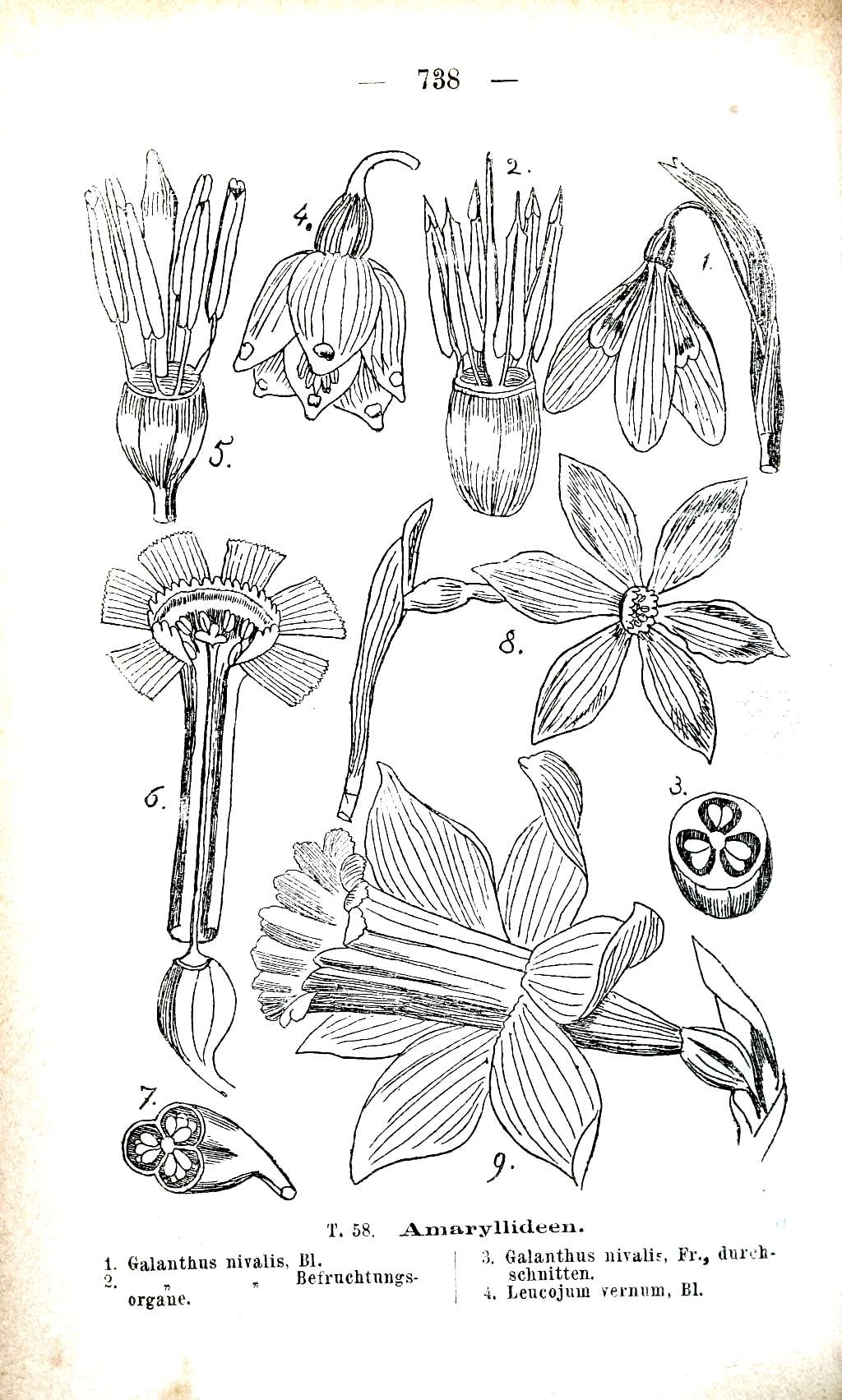 Diagram Of Orchid