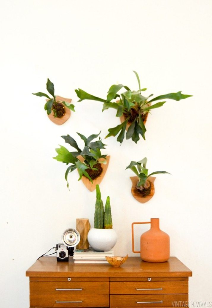 How to Mount and Care For a Staghorn Fern-25