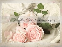 shabby vintage rose note cards