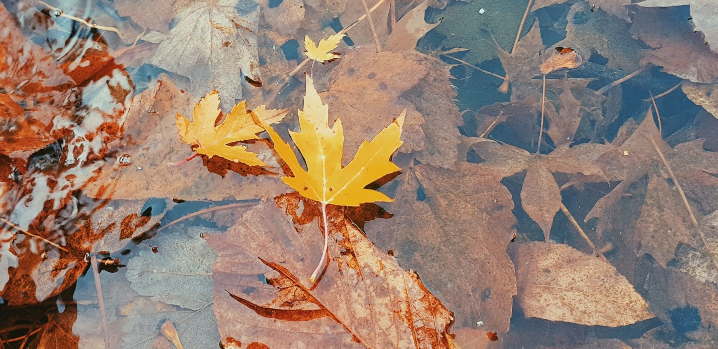 A Walk In The Park | My Nod To Autumn