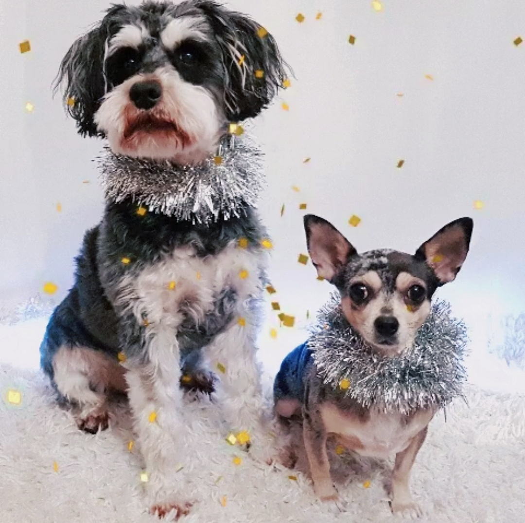 Happy New Year From The Dogs