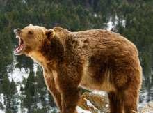 Bear Markets - Vintage Value Investing