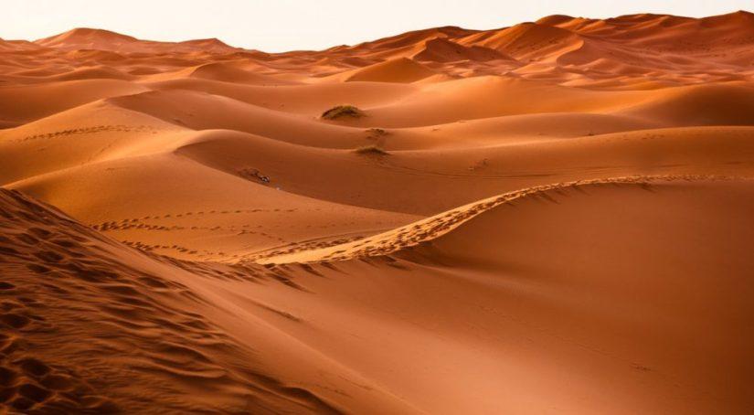 Vintage Value Investing - Desert