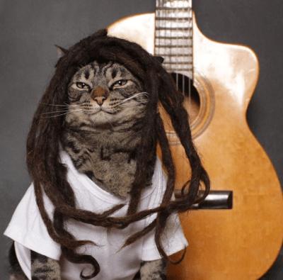 Cansei de ser gato, agora vou ser Bob Marley