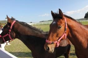 horse farm at Urla