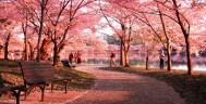 Cherry-Blossom-Festival--f63