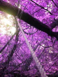 purple-leaves-images-photos-0303015524