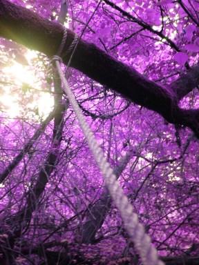 purple-leaves-images-photos-0303015524
