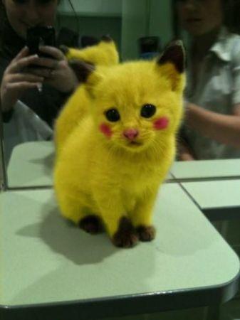 500x700px-LL-379ffbad_anime-cat-cute-cuteness-overload-kitten-Favim_com-350157_large