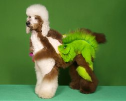 Dogs-dyed-and-sheared-to-look-like-wild-animals-3