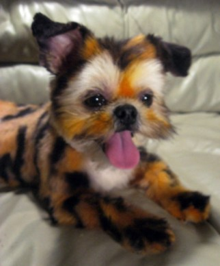 dog-as-tiger-2-071112
