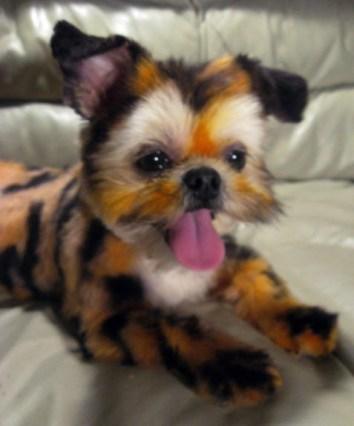 dog-as-tiger-2-071112