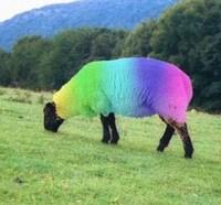 rainbow_sheep-thumb