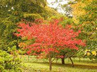 autumn-Bodnant-garden3-north-wales-violet-skies