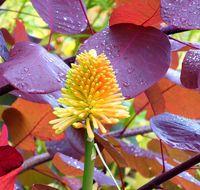 autumn-Bodnant-garden6-north-wales-violet-skies