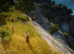 BDO Trent Hill Horse Location