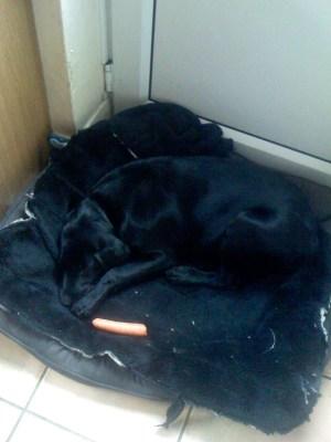 Betty sleeping