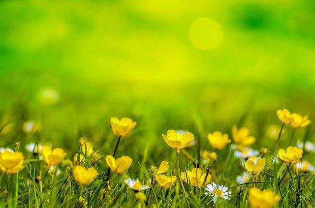czas kwarantanny...zielono mi..:)