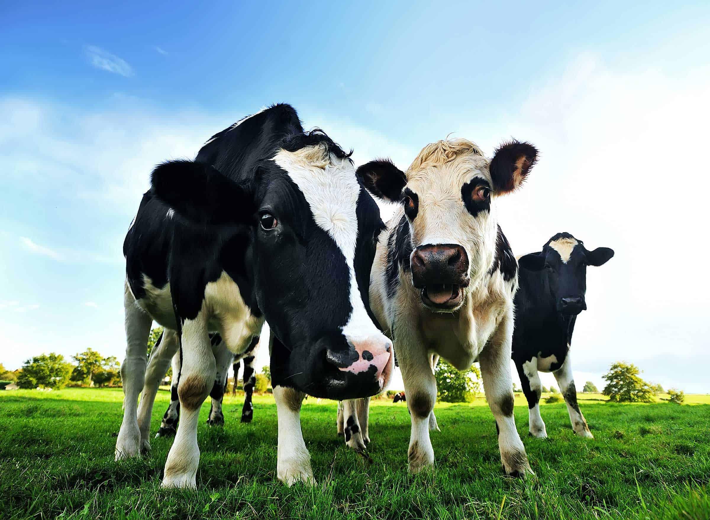 Creșterere cu 8% în producția de produse lactate