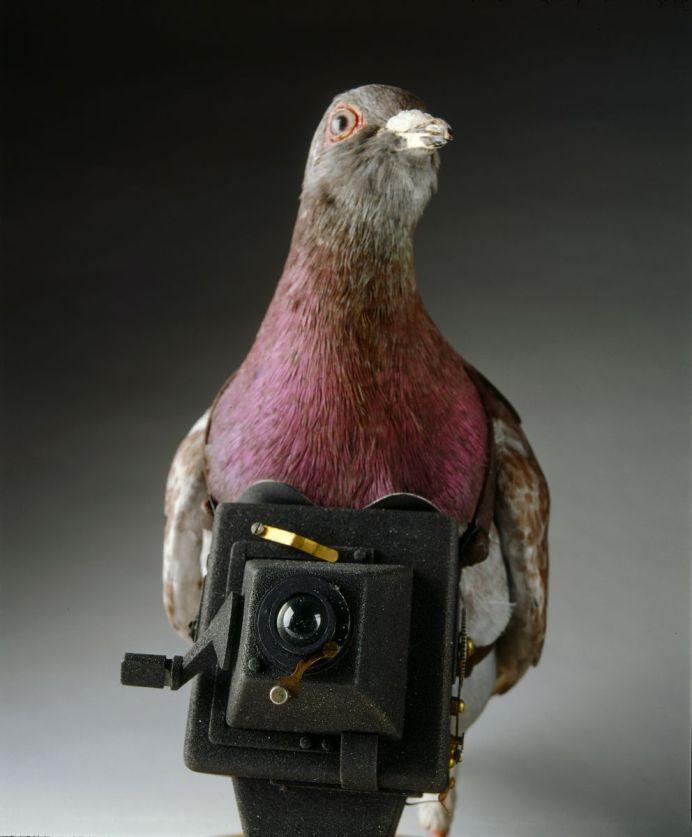 Washington DC - Spy Museum - Taube mit Spionagekamera
