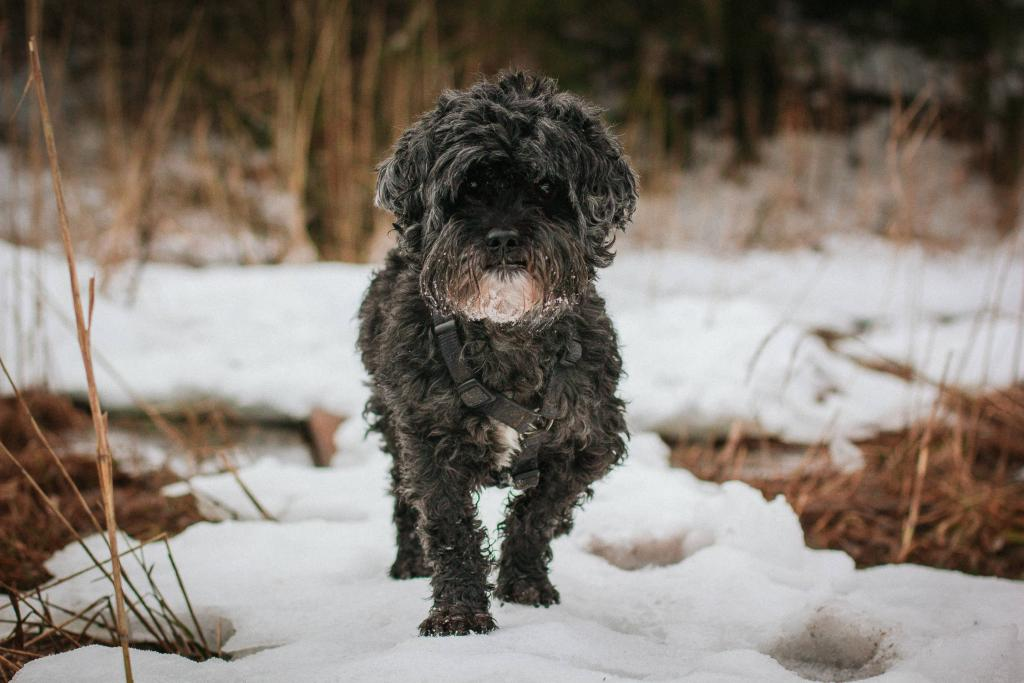 Tierportrait in der Natur im Winter Hund