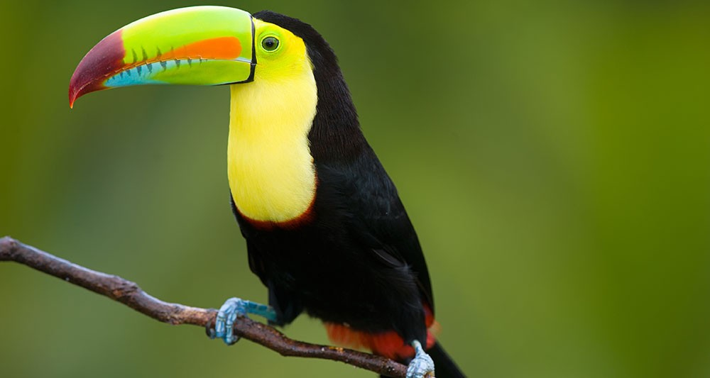 belize-birding-tour