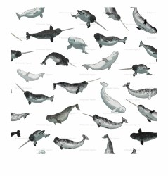 Narwhal And Beluga Whale Pattern Transparent Wallpaper Beluga Whale Transparent PNG Download #3316075 Vippng
