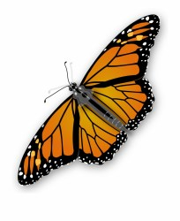 Butterfly Png Image Transparent Background Butterfly Clipart Transparent PNG Download #396538 Vippng