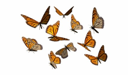 Butterfly Clipart Transparent Background Butterflies Clipart Transparent Background Transparent PNG Download #669975 Vippng
