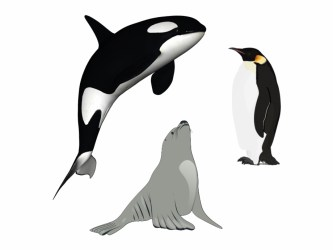 Killer Whale Download Png Killer Whale Transparent Background Transparent PNG Download #706620 Vippng