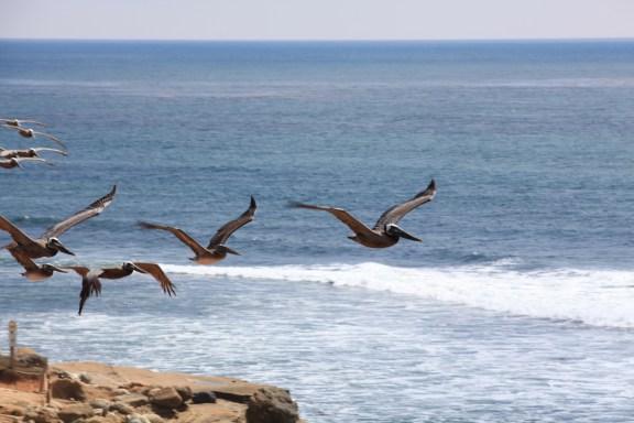 Pelican formation