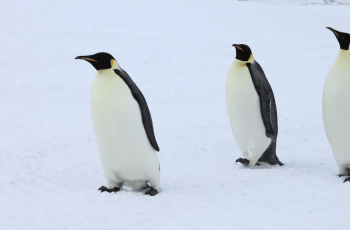 Intel and partners are using computer vision to help save Antarctica's penguins from extinction
