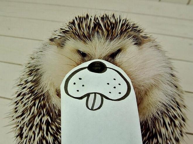 想要一點快樂?這隻可愛的小刺猬肯定可以令你笑出來!