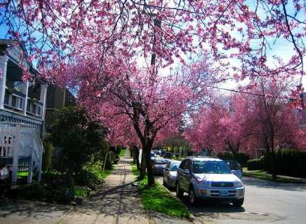 Most Beautiful Trees In The World 8