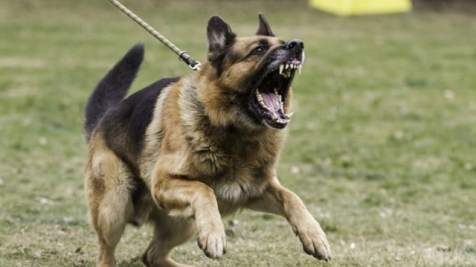 Most Dangerous Dog Breeds In The World 8