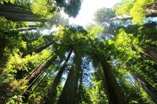 Most Beautiful Trees In The World 5