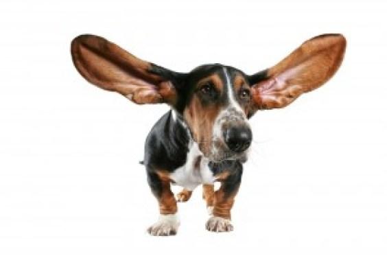 dog facts 15