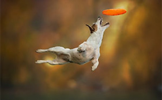 animal-action-photography-dogs-can-fly-claudio-piccoli-latest
