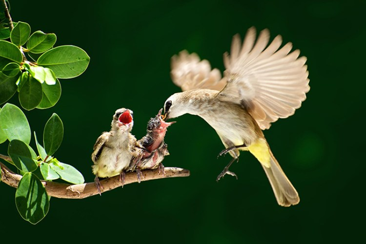 pictures-of-birds-with-their-little-onespp