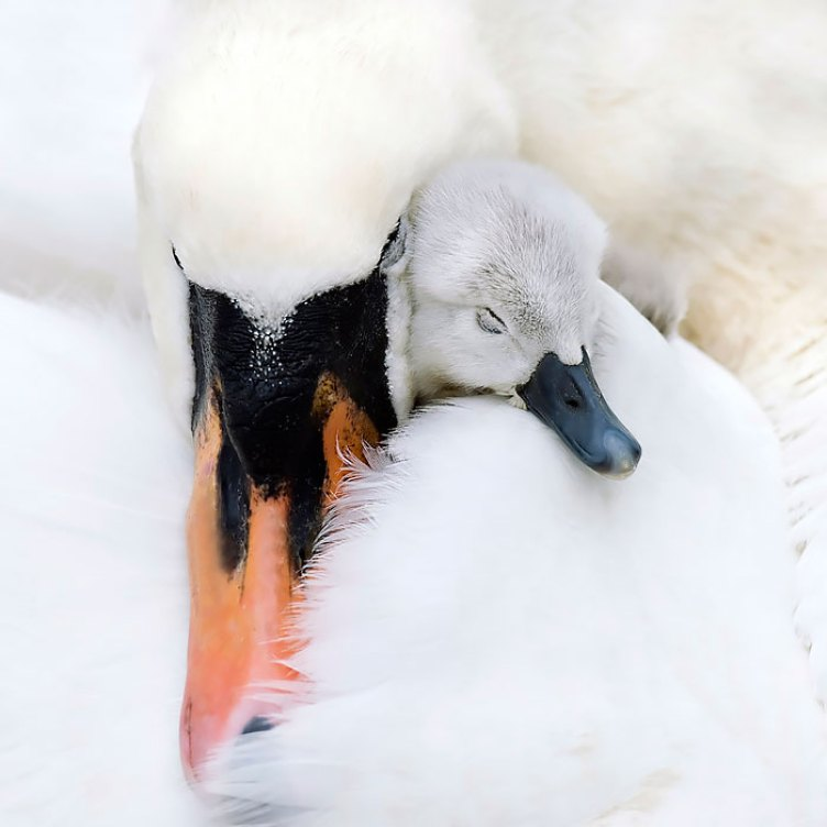pictures-of-birds-with-their-little-onesr