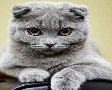 30 ravishing felines