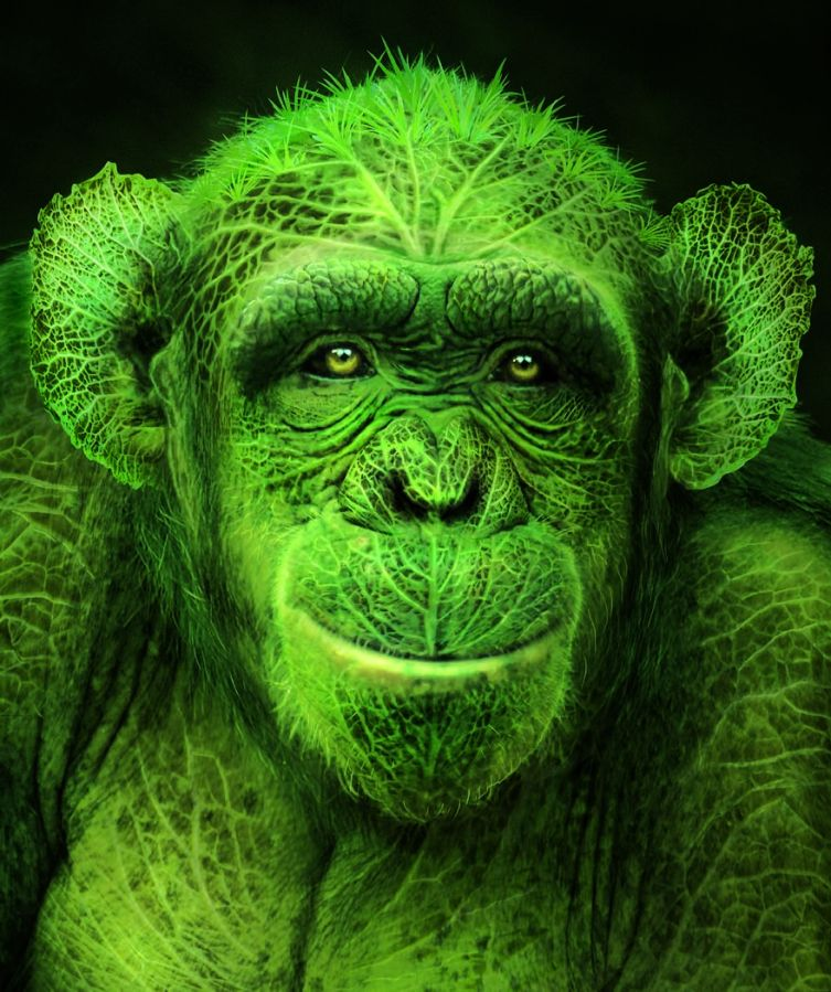 green-monkeys