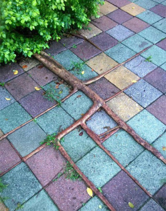 oddly-satisfying-photos-perfection-44-57307fe68993b__605