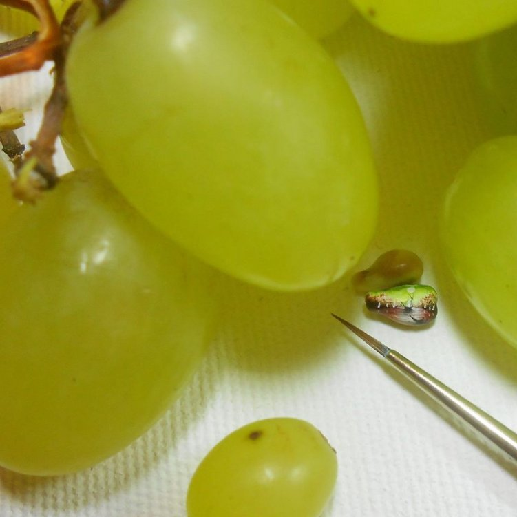 18-painting-in-grapes
